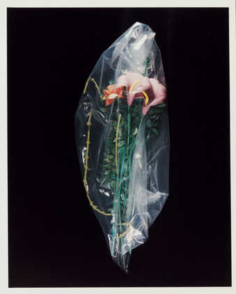 Photograph of flowers in plastic bag.