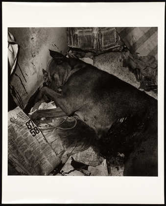An image of a dead dog.